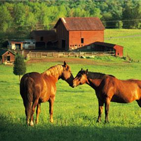 Columbia Farm Supply | 170 Bear Creek Pike, Columbia ...